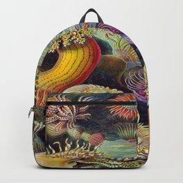 Ernst-haeckel-Actiniae Backpack