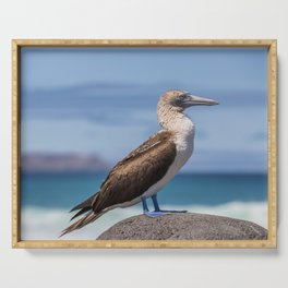 Galapagos blue footed booby bird photography Serving Tray