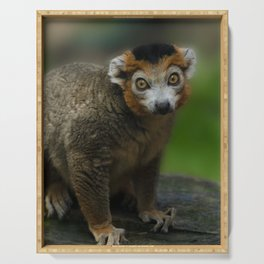 Crowned Lemur Looking At You Serving Tray