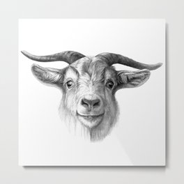 Curious Goat G124 Metal Print