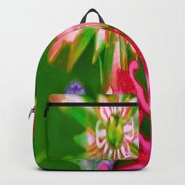 LAFAYETTE STARS 4 Backpack