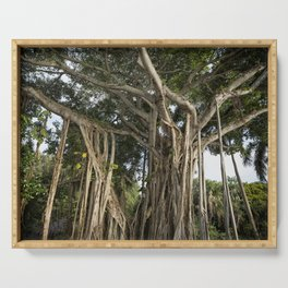 Banyan Tree at Bonnet House Serving Tray