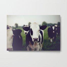 Cow Metal Print