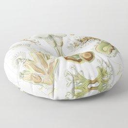 Ernst Haeckel Floor Pillow