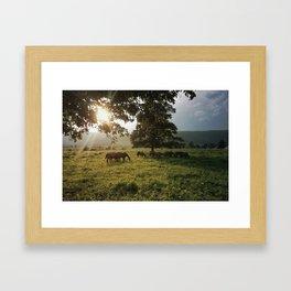 Bluemont Horses in Virginia Framed Art Print