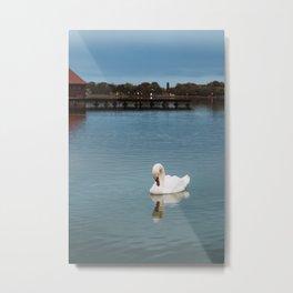 Swan swimming at Lake Palic, Serbia / Blue / Dawn Metal Print