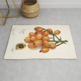 Loquats (Eriobotrya Japonica) (1908) by Amanda Almira Newton Rug