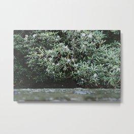 Streams of Living Water 2 Metal Print
