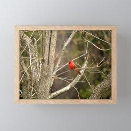 Cardinal Framed Mini Art Print