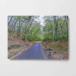 Country road in a forest Metal Print