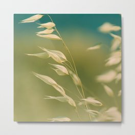 Oats in the soft breeze Metal Print