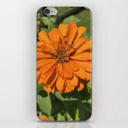 Zinnia Love 2 iPhone Skin