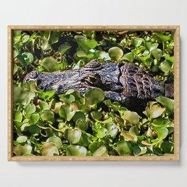 Black Brazilian Caiman Alligator Bathing Swamp  Pantanal, Brazil Serving Tray