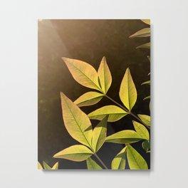 Leaves in the Sun Metal Print