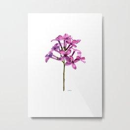 Lilac Syringa Vulagaris Metal Print
