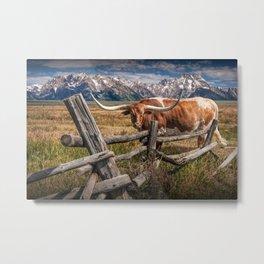 Texas Longhorn Steer with Wood Log Fence in Wyoming Pasture Metal Print