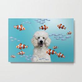 Clownfishes Poodle underwater Aquarium Metal Print