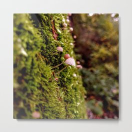 Cute little white mushrooms on dense green moss covered tree trunk in the forest Metal Print