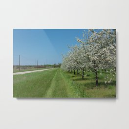blossoms for miles Metal Print