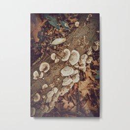 Finding Fungi is like finding treasure Metal Print