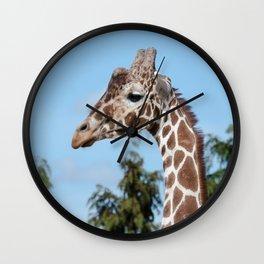 Reticulated giraffe Wall Clock