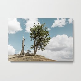 Surviving pine tree at Bryce Canyon National Park Metal Print