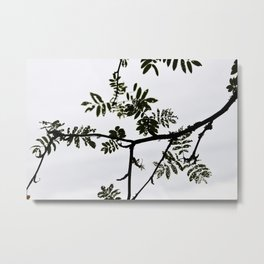Rowan branch against the sky Metal Print
