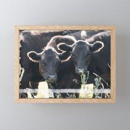 Black Angus Cattle 3 Framed Mini Art Print