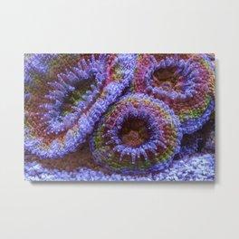 Coral Acanthastrea Lordhowensis Rainbow Metal Print