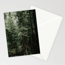 Redwoods in Muir Woods Stationery Cards