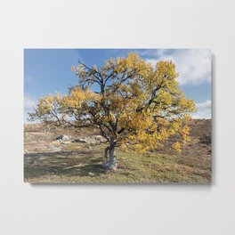 Yellow tree in the mountains Metal Print