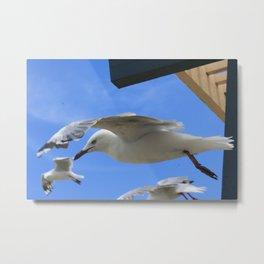 Gull company Metal Print