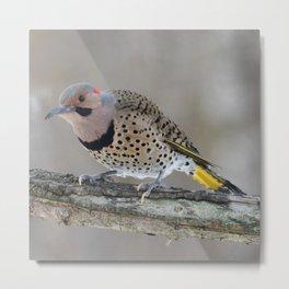 Fabulous Flicker Woodpecker Metal Print