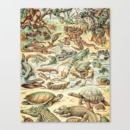 Reptiles II by Adolphe Millot // XL 19th Century Snakes Lizards Alligators Science Textbook Artwork Canvas Print