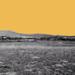 Desert Mallow Studio