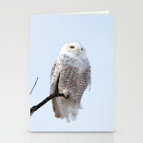 Lofty Vision (Snowy Owl) Stationery Cards