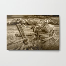 Texas Longhorn Steer by an Old Wooden Fence in Sepia Tone Metal Print