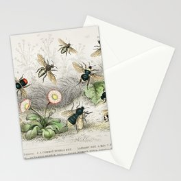 Honey Bee, Worker, Male, Queen, , Female, Moss or Carder Bee, Donovan's Humble Bee, Harris Humble Be Stationery Cards