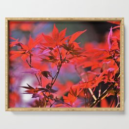 Red Japanese Maple Leaves Serving Tray