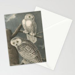 Vintage Illustration of Snowy Owls (1840) Stationery Cards