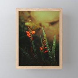 Welsh Wildflowers at Fairy Glen Framed Mini Art Print