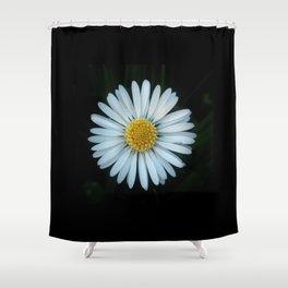Daisy 3- Marguerite – margarita-oxeye Shower Curtain