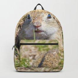 Souslik (Spermophilus citellus) European ground squirrel in the natural environment Backpack