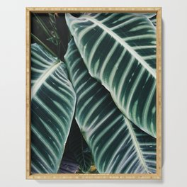 calathea Serving Tray