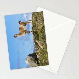 A Guanaco Stationery Cards