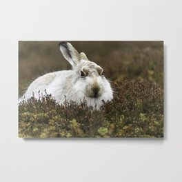 mountain hare Metal Print