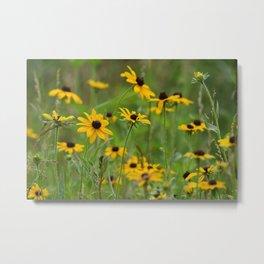Black Eyed Susan Wildflower Field Landscape Metal Print