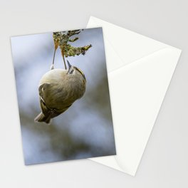 Goldcrest | Yellow Crown Bird | Bird Photography Stationery Cards