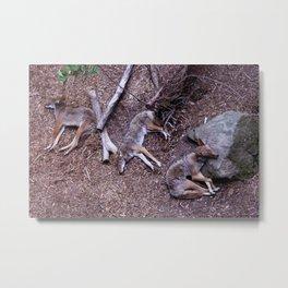 Wolf Naps Metal Print