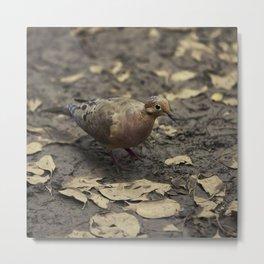 Brown dove dried leaves Wildlife lover Metal Print